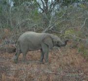 junger-elefant.jpg