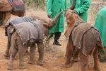 Kenia - Drei Elefantenwaisen