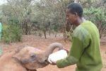 Kenia - Elefantenwaisen bekommt die Flasche