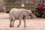Kenia - Elefantenwaisen vor Traktor