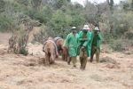 Kenia - Helfer mit Elefanten