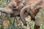 Kenia - Zwei Elefanten Waisen