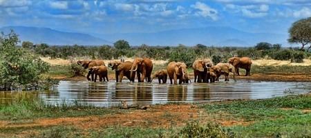 Abbildung 2: Die Flora und Fauna Südafrikas bietet viele Möglichkeiten, etwas ganz Besonderes zu entdecken. Dazu gehören nicht nur Elefanten, sondern zahlreiche andere Tiere.