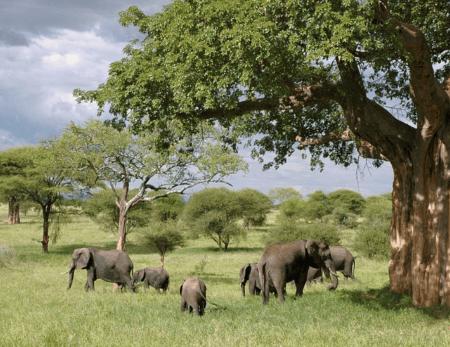 Eine Safari macht Spaß - jedoch nur, wenn die Gesundheit mitspielt.