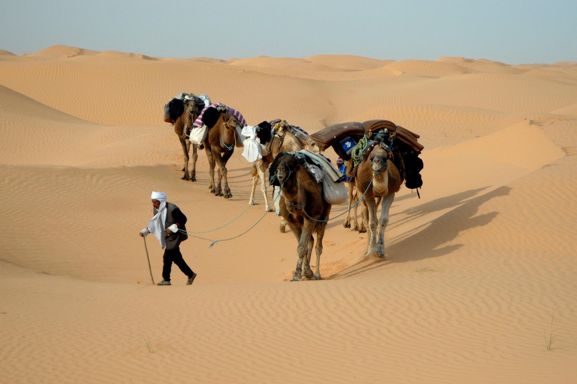 Dromedartrekking durch die nordafrikanische Wüste ist bei Touristen sehr beliebt.